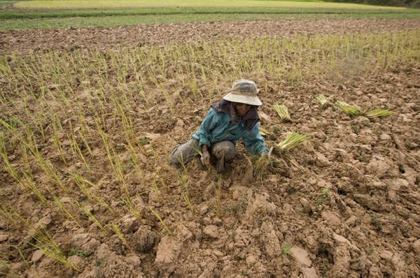 Over 200,000 rai of agricultural land affected by the worsening drought