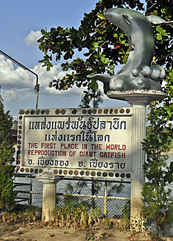 Chiang Khong in North Thailand claims to be the first place where Giant Catfish was bred.