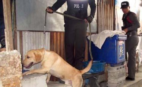 Investigators expanded the operation and caught Thanesuan Pensuwapap and two accomplices at an apartment