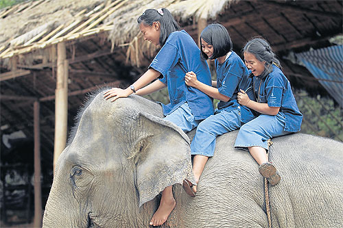 Mahout training is part of Elephants For Kids, a charity project by The Sold Project in collaboration with the Golden Triangle Elephant Foundation to empower and education children at risk of becoming victims of human trafficking.