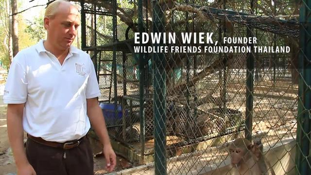 The Wildlife Friends Foundation Thailand sanctuary covers 25 hectares (61 acres) of jungle near the village of Kao Look Chang