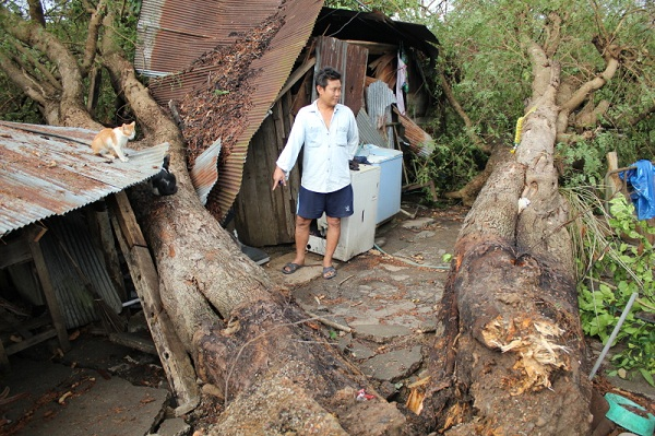 Large tree to fall and extensively damage a house