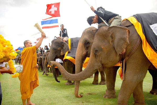 The highly popular King's Cup Elephant Polo tournament
