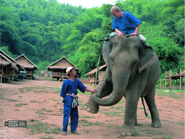 John Roberts is the Director of Elephants at the Anantara Resort Golden Triangle