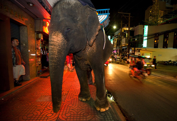 Elephants are still found in other urban areas in tourist centres, such as Chiang Mai.