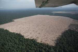 Cambodia's deforestation is the world's third highest, after Nigeria and Vietnam.