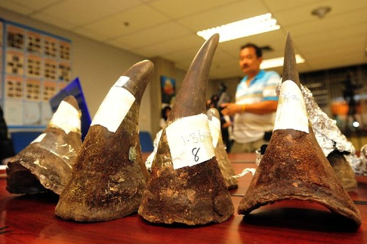 Officers found eight rhinoceros horns weighing a total of 9.6 kilograms hidden in the suspect's luggage