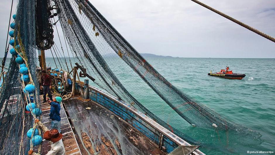 Fishermen controversially use fine nets to scour the bottom of the sea indiscriminately