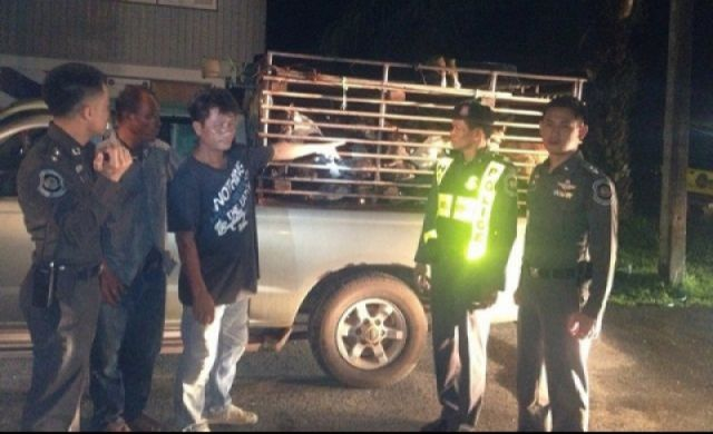 The driver, Witthaya Dalunphan, 47, and Sawaeng Dalunphan, 45, were detained for questioning