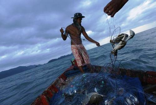 For some small fishermen, the catch has dropped by half.