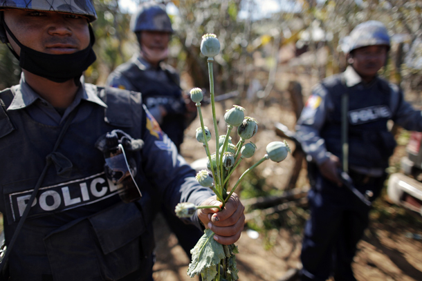 A policeman holds poppy plants after a field was destroyed