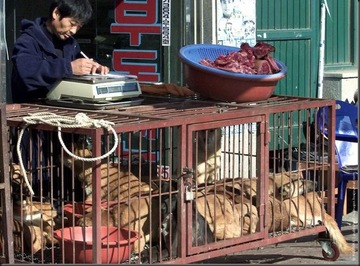 Pet ownership is still relatively new in Vietnam – dogs here have traditionally been reared for either food or security purposes