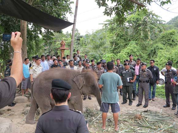 The co-ordinated effort across the provinces was jointly managed by the Royal Thai Police, Natural Resources and Environmental Crime Division, the Department of National Parks, Wildlife and Plant Conservation and the Department of Livestock.