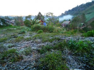 Frost on the Ground in Chiang Rai