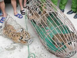 Four endangered tiger cubs and over 100 pangolins seized from car