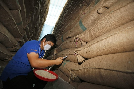 A Thai official of the commodity standards office, the Department of Foreign Trade, inspects the quality of rice in the sacks of rice stored at a warehouses in the Nonthaburi province, Thailand