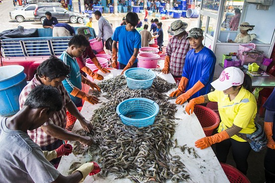 Migrant workers from Myanmar sort shrimp at a processing center in Samut Sakhon, Thailand. Zuma Press