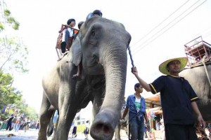 Elephant rides are popular with tourists in Thailand