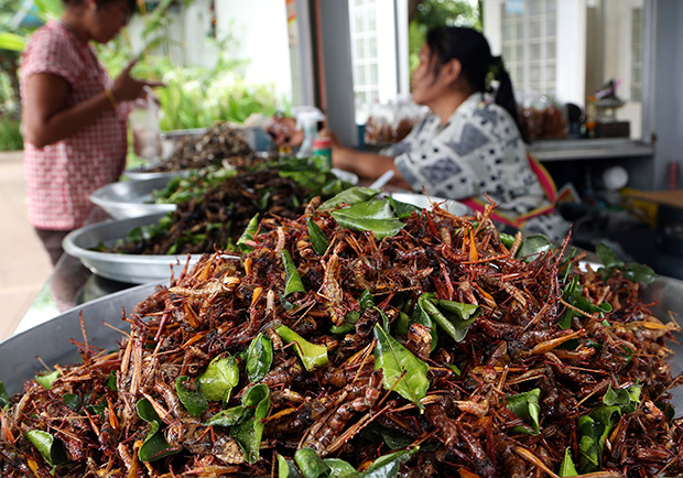 A woman sells fried grasshoppers and other fried insects at a stand at a gas station in Nakhon Ratchasima province, northeastern Thailand. Six-legged livestock, as UN Food and Agriculture Organization calls them, take just 3.8 litres of water, 1 kg. of feed and a small cubicle to produce a pound of crickets.