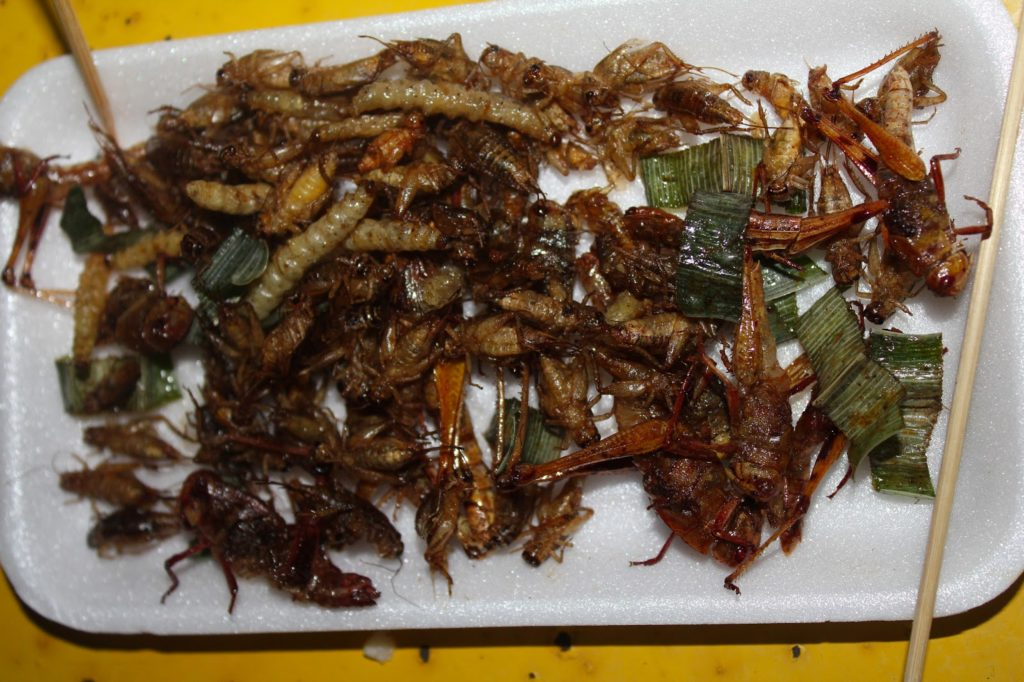 Our mixed selection of bugs. Consisting of grass hoppers, crickets and slug like worms in Chiang Rai