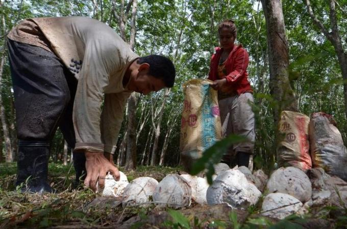 Thailand is the world's biggest rubber producer and exporter with around 90% of its output heading overseas