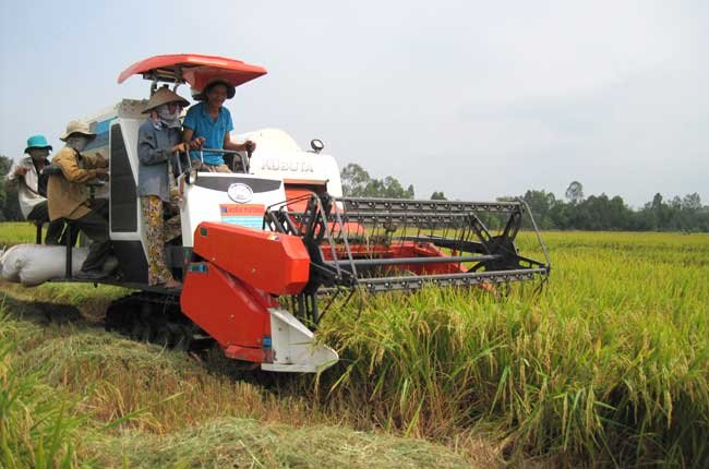 Government should also compensate the price difference to farmers owning less than 40 rais of land and strictly set standard for rice moisture measurement meter and provide financial supports for their rice production.