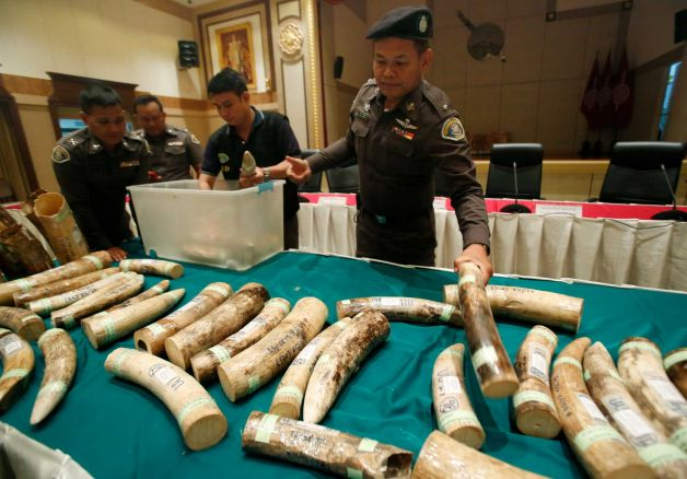 Thai police officers display seized smuggled ivory during a press conference at the police headquarters in Bangkok