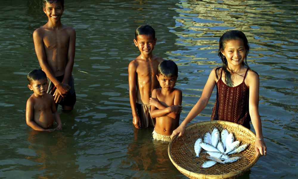 """Children with a basket full of  Mekong freshwater herring """"pa mak pang"""" or Laotian shad"""