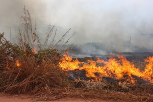 Annual Burning of Fields