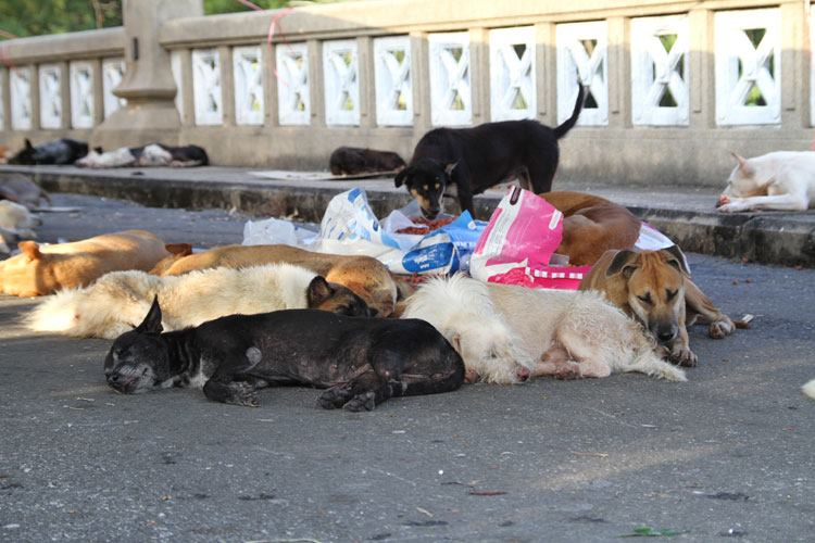 Stray dogs were unclean, caused noise pollution and road accidents, and spread pestilence -- particularly rabies.