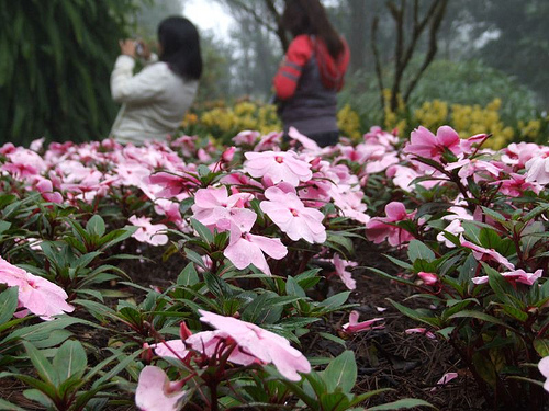 Landscapeed flower Garden Mae Fah Luang Garden Located at Doi Tung Chiang Rai Northern Thailand There are several types of winter flower