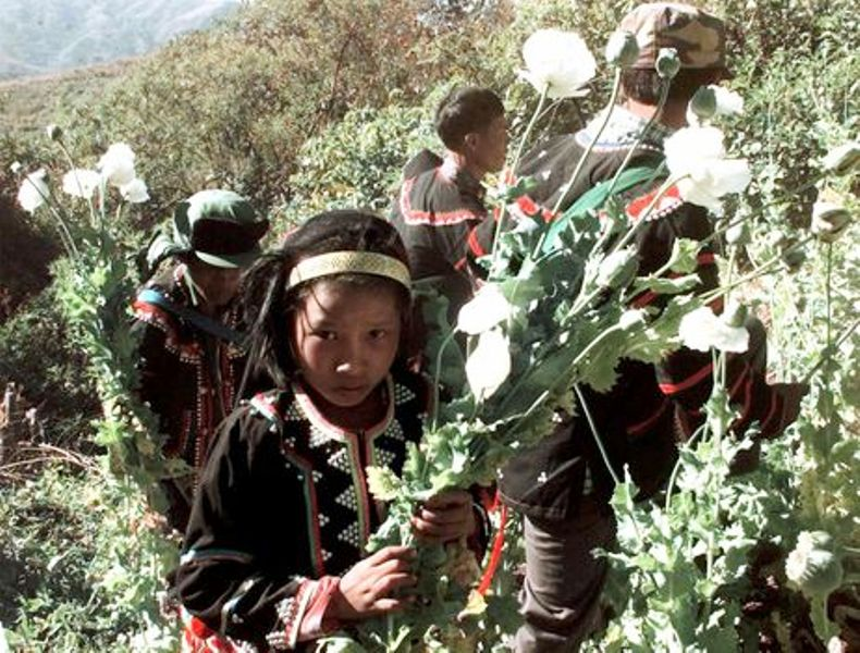 A Lahu hilltribe girl holds a bunch of opium poppies as she joined her tribe in eradicating of illegal opium poppy's