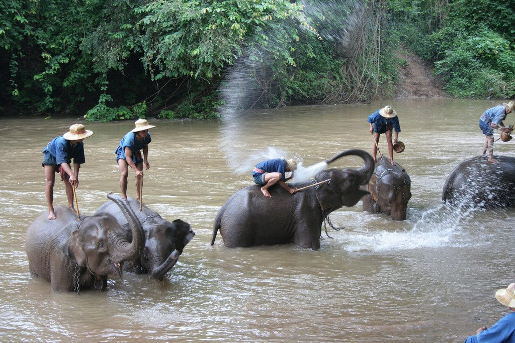 Hot weather conditions have made elephants irritable and the animals are therefore allowed to remain along the Kok River to cool down.