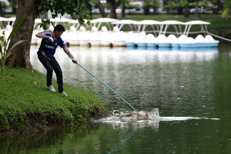 A park official catches a monitor lizard with a lasso in Lumpini Park. (AFP Photo/Munir Uz Zaman)