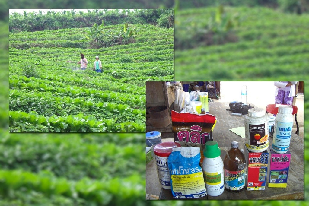 chemicals toxic contamination northern Thailand