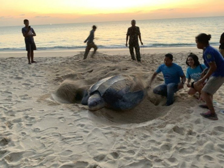 leatherback turtle eggs stolen