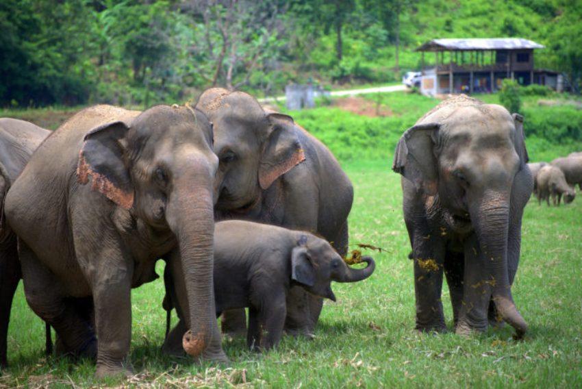 baby elephants at elephant camps