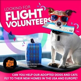 Flight Volunteers Thailand's Soi Dog Foundation